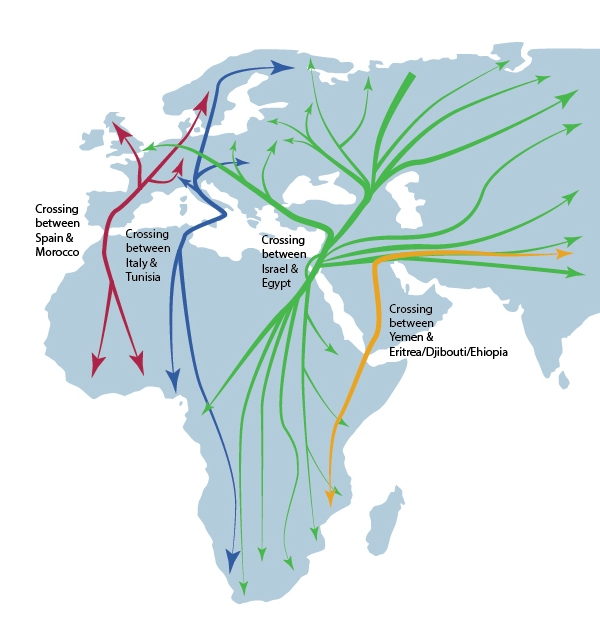 A GIF Map Of The Migration Routes Of Species Of Birds In North - Weather patterns map us and bird migration