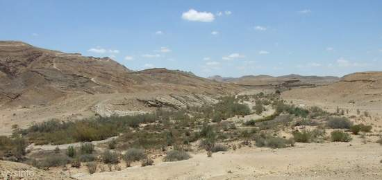 Wadi beside Khan Saharonim