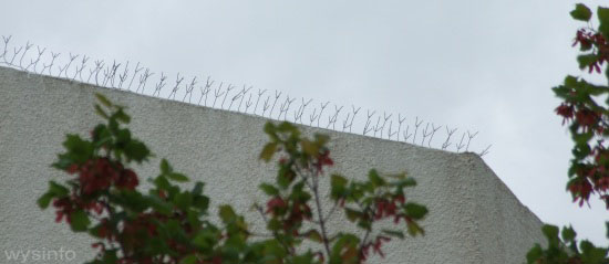 Fine spikes on rooftop