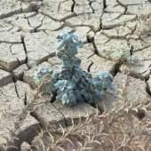 Dead Sea Flora