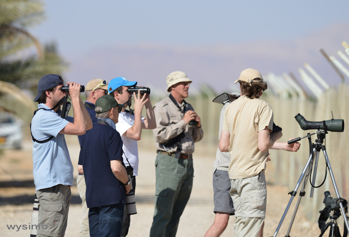 Birders north of Eilat looking at the pied bush chat - rare for this area