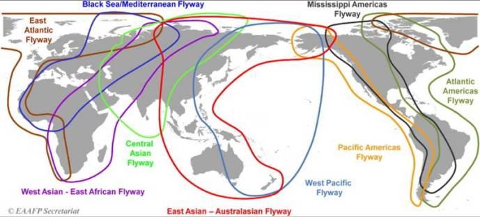 Nine major migratory waterbird flyways