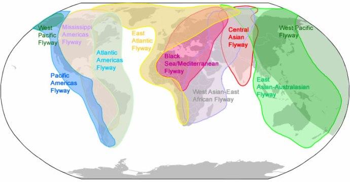 Main Flyways of Migratory Birds