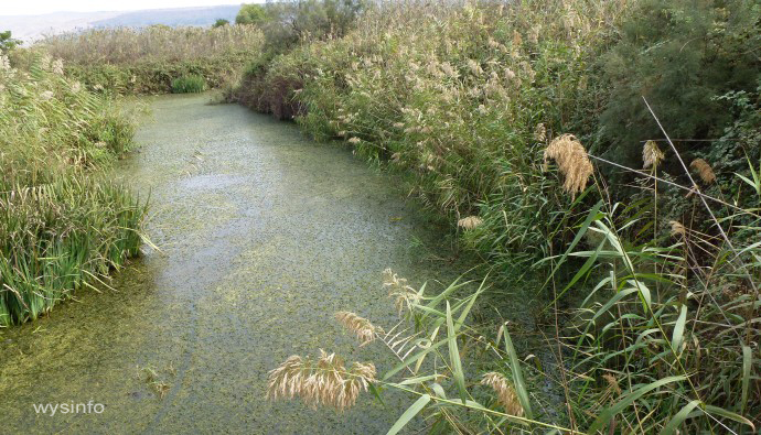 Swamps in Hula valley