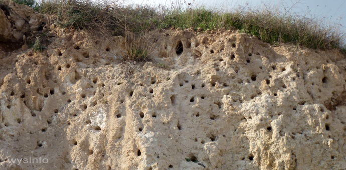 Bee Eaters' Nests