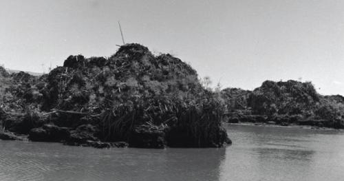 Mound of Peat Soil Collected in Swamps of Hula - 1954