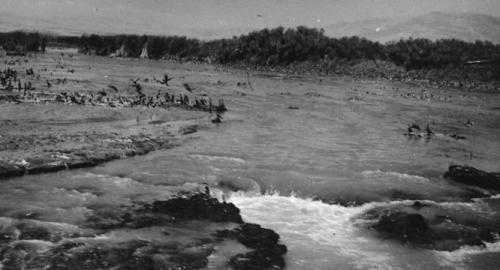 Migratory Birds in Hula Valley (1954) Before Drying the Swamps