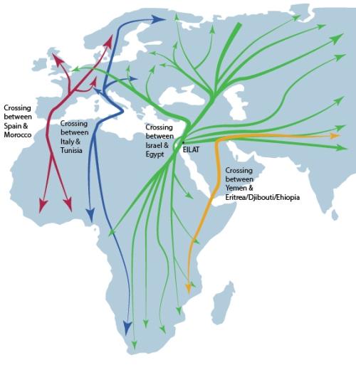 Migratory bird routes