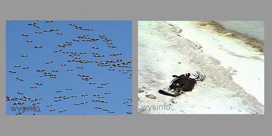 Migratory birds flying over the Dead Sea region
